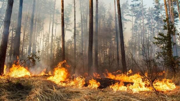 Дональд Трамп посетит Калифорнию, где полыхают лесные пожары