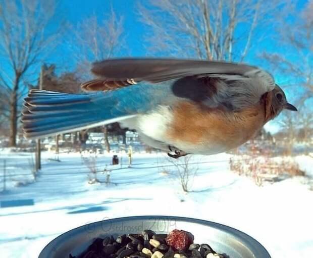 Фотограф подловил птиц в самые неожиданные моменты Ostdrossel, в мире, кормушка, момент, природа, птицы, фото, фотограф