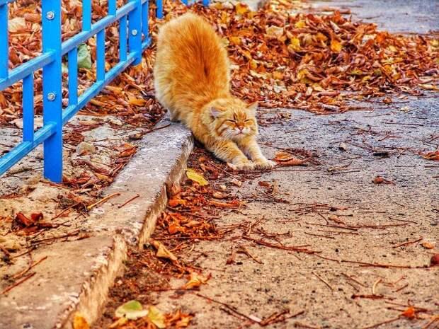 В субботу температура воздуха в Удмуртии начнет понижаться
