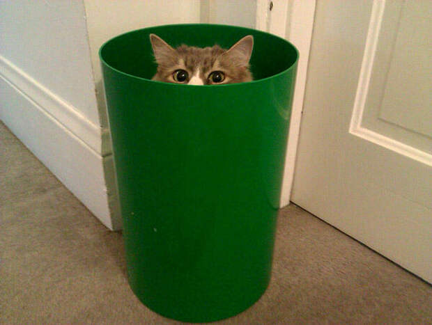 Как мы забыли кота в морозилке и что из этого вышло. Случай из жизни