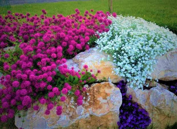 Красивое растение - замена дорогой мульчи: что стоит посадить в цветнике и в розарии, чтобы не полоть сорняки