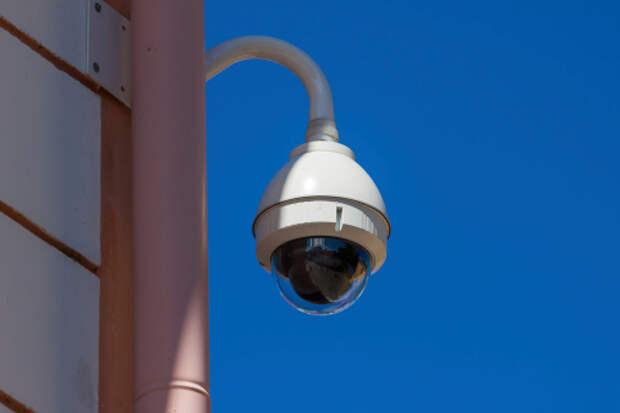 На площадке для выгула собак на Синявинской установят камеры видеонаблюдения