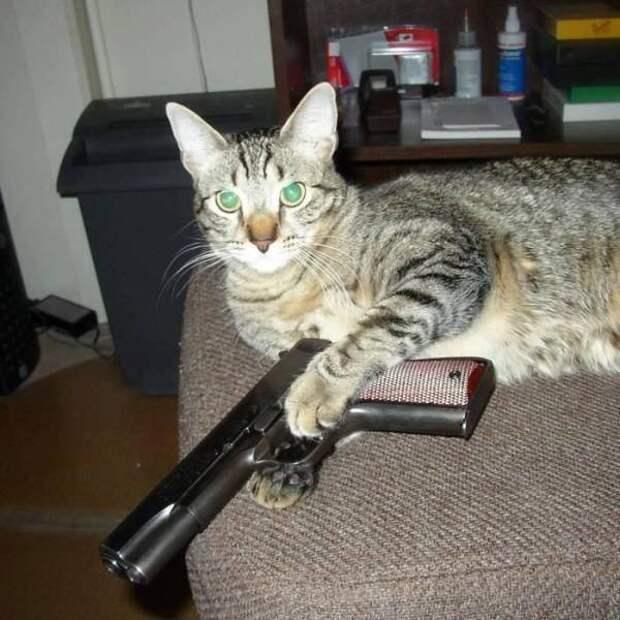 Кот с оружием