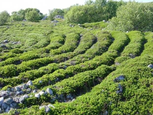 Каменные лабиринты Соловецких островов
