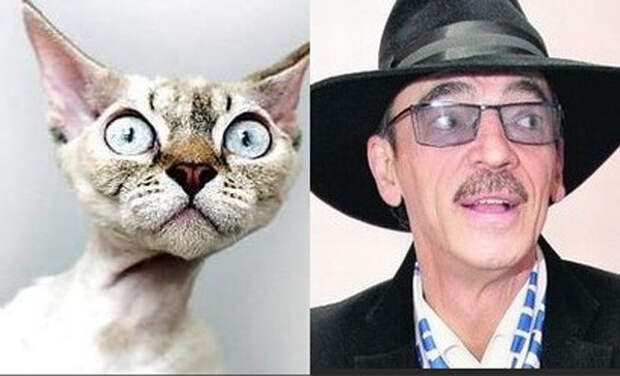 Правда, похожи?! Коты и их знаменитые копии… Где-то в параллельном мире))