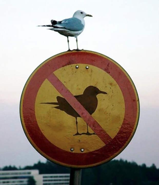 Этим храбрым ребятам плевать на любые правила и запреты