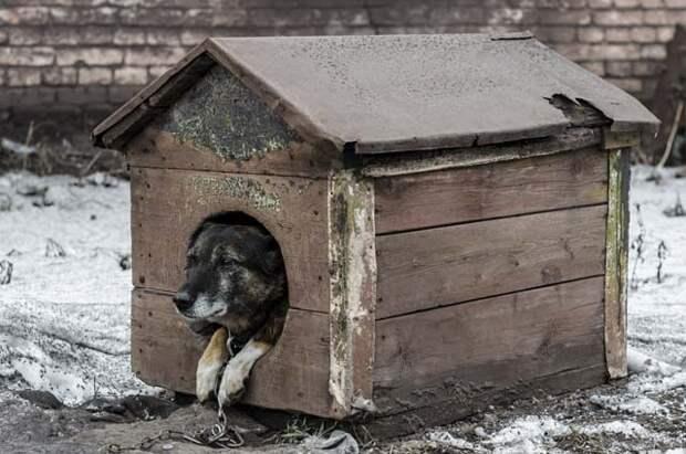 Собака в будке