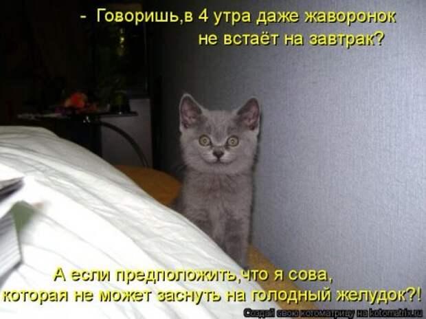 1451492386_kotomatritsa_el
