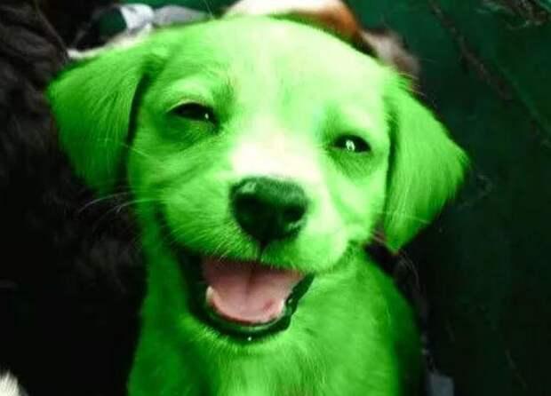 Зеленые собаки