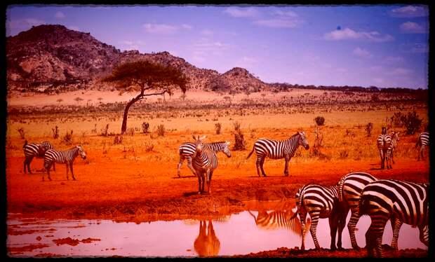 Заметки микробиолога об африканском курорте