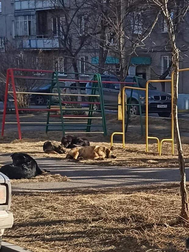 Почти тысячу бездомных собак отловили в Красноярске за четыре месяца