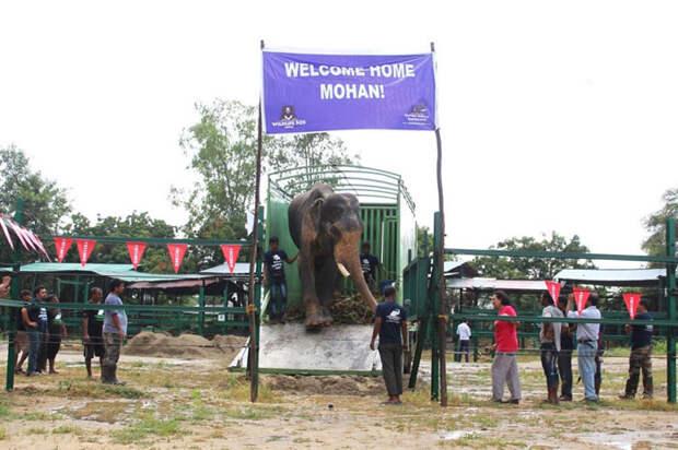 На свободе после 50 лет заключения в рабстве: история самого неудачливого слона