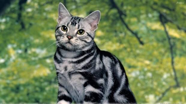 Существует также предположение, что эти кармашки выполняет роль своеобразных клапанов, помогающих в случае надобности закрыть ухо. животные, интересное, кошки