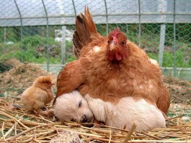 Крылатые мамы