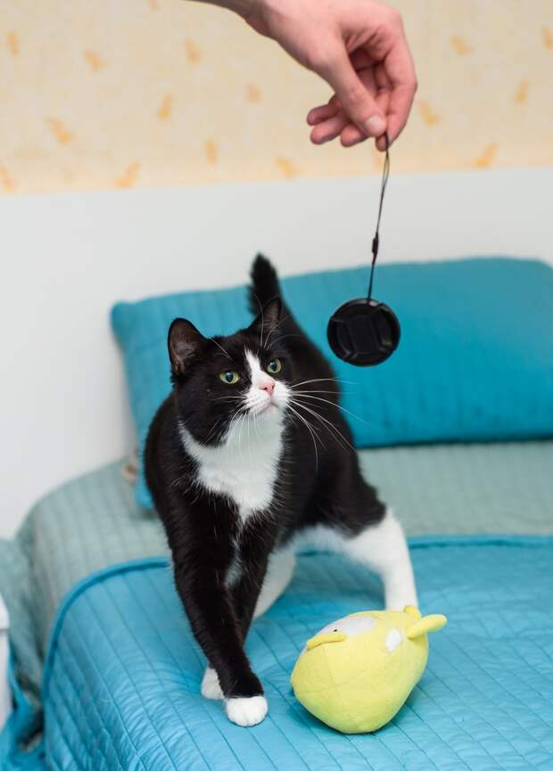 В доме, где жила Маруся появился враг кошек - аллергия, и теперь Маруся осталась без дома...
