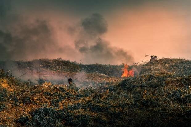 В 20 районах Удмуртии ввели запрет на посещение лесов