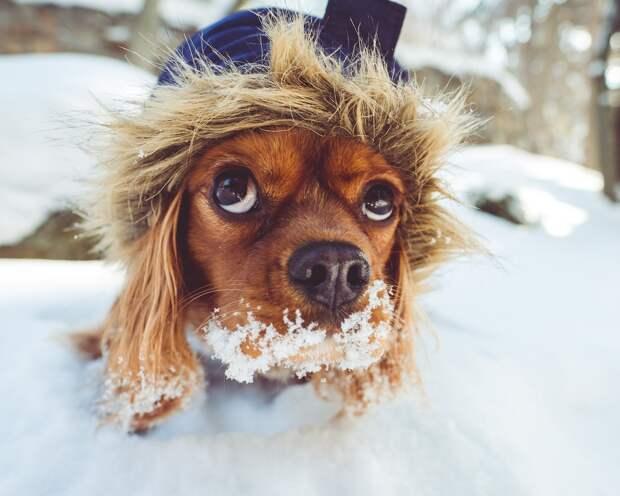 Умеренный снег и облачность ожидаются в Удмуртии в среду