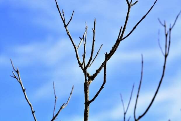 Сухие Ветки, Голубое Небо, Экология, Осень, Пейзаж