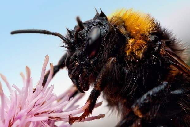 insects52 Портреты насекомых