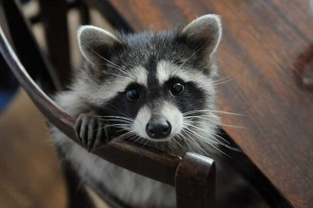 Милые и позитивные животные для улучшения настроения