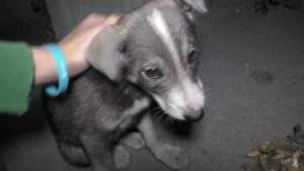 Мальчики спасли щенка, который застрял в тоннеле
