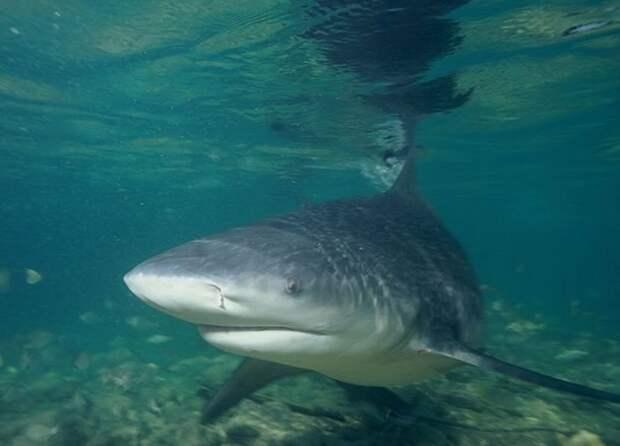 Адаптация акулы, факты, хищники