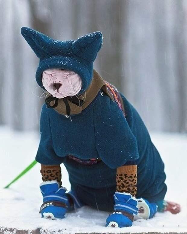 Одевайте их теплее интересное, коты, смешное