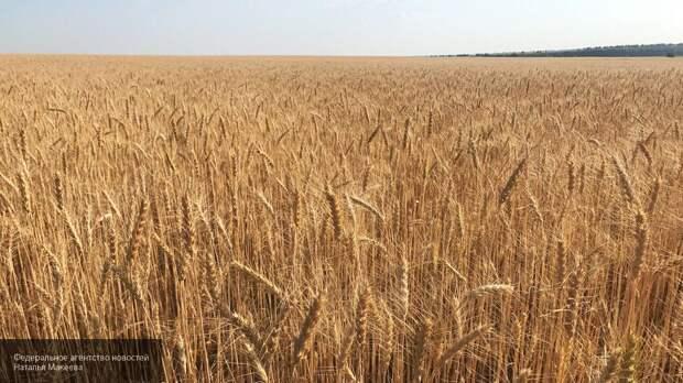 Эксперты объяснили, как санкции Латвии позволили России стать «агропромышленным гигантом»