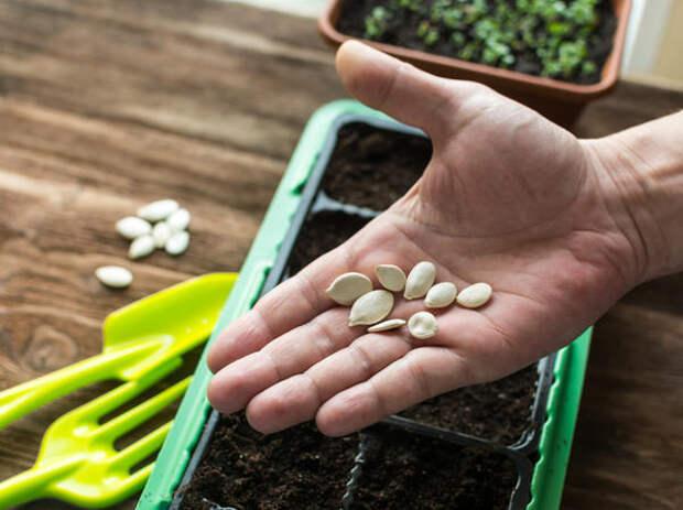 Даже дачники со стажем верят в мифы о семенах