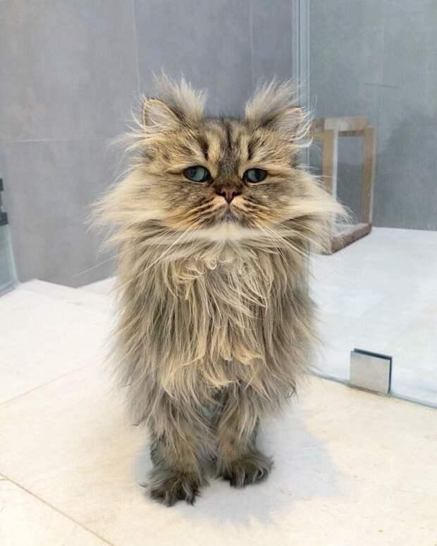 Котик Барнаби выглядит как герой анекдота «Поднять подняли, а разбудить забыли»