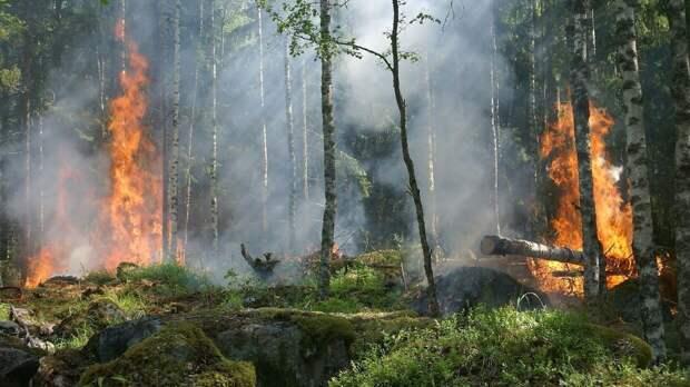 Жителям Забайкалья могут закрыть доступ в леса из-за пожаров