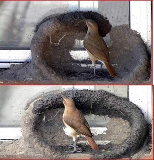 """Эти птички явно читают раздел """"Строительство"""" животные, птиц"""