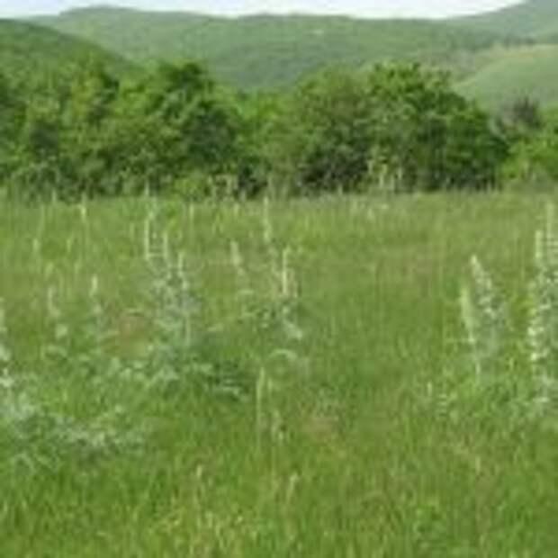 Шесть лесопарковых поясов создали в Краснодарском крае