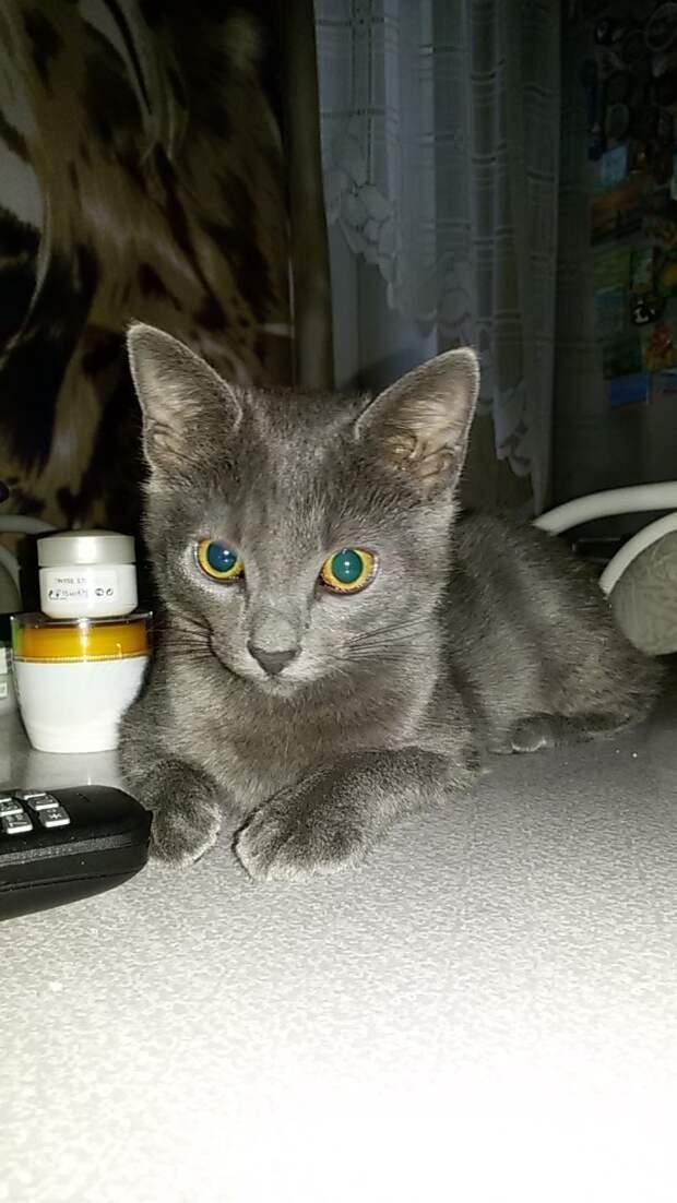 Как оказался такой маленький котенок один на улице?