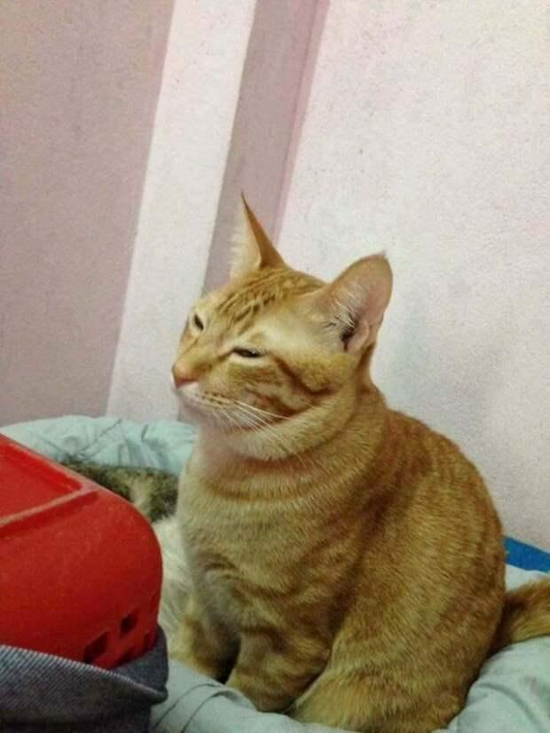 Кот-отец поддержал свою кошку во время родов животные, забота, кот, роды