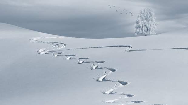 Зимний, Бэккантри Лыжно, Лыжные Трассы, Следы В Снегу