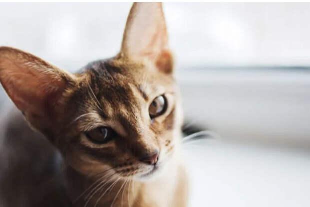 ВСеверной Корее уничтожат кошек