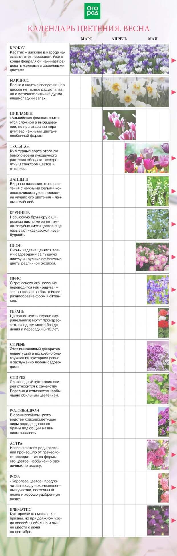 цветочный календарь на весну