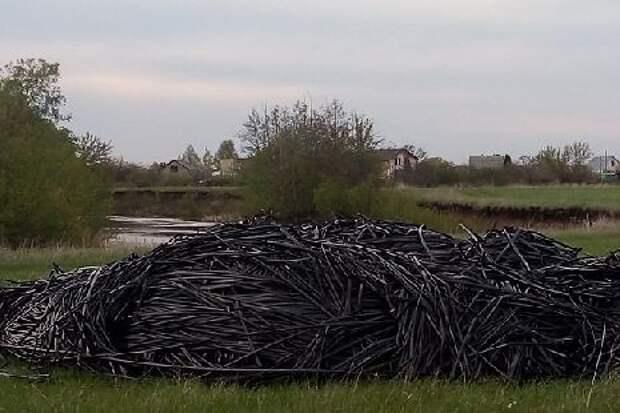 Жители Знаменского района попросили принять меры по защите окружающей среды