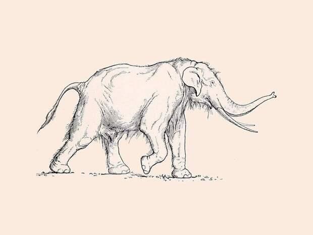 Люди были способны убить слона уже в палеолите