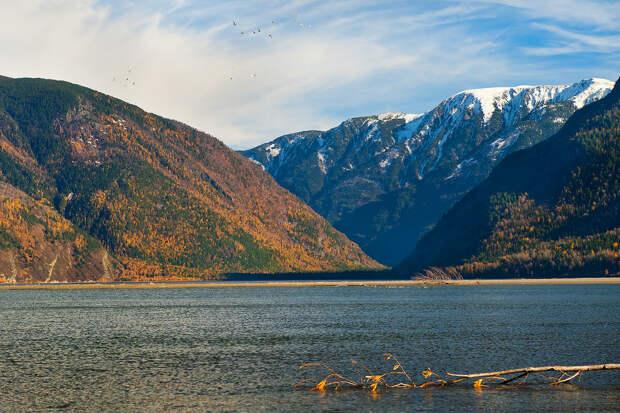 Лебеди над озером (желательно увеличить кадр)