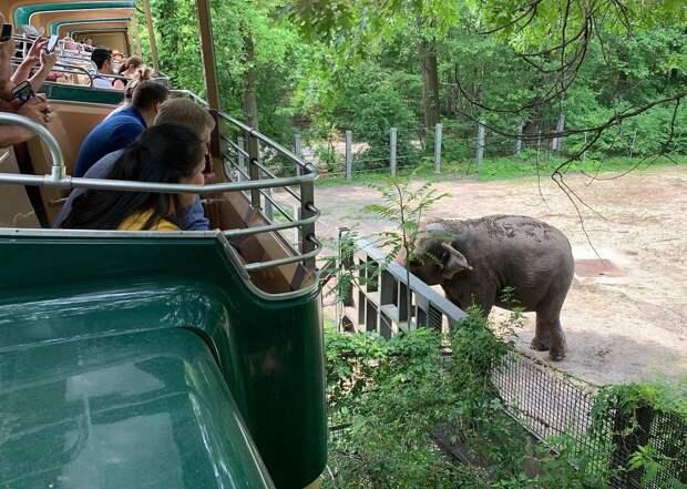 В США слон судится с зоопарком из-за того, что его содержат в неволе. Да, вы всё правильно...