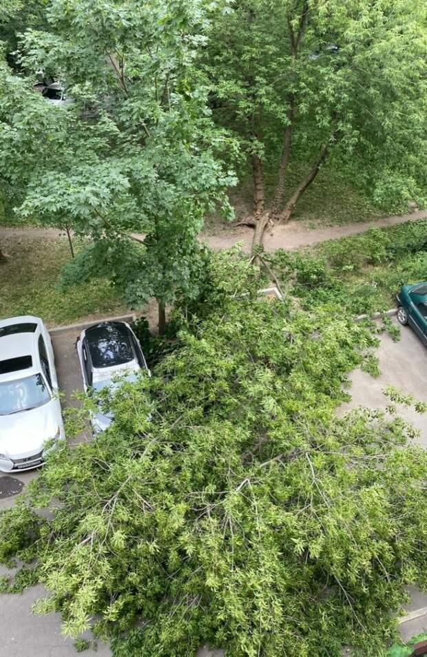 Фото дня: на 2-й улице Марьиной Рощи упало дерево