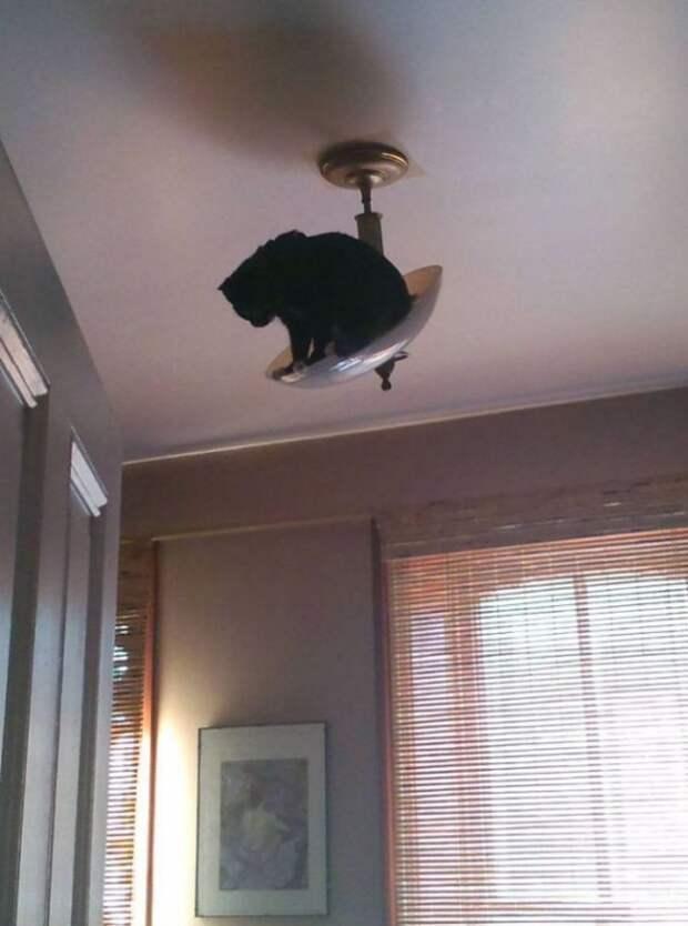 Коты, которым все пофигу…