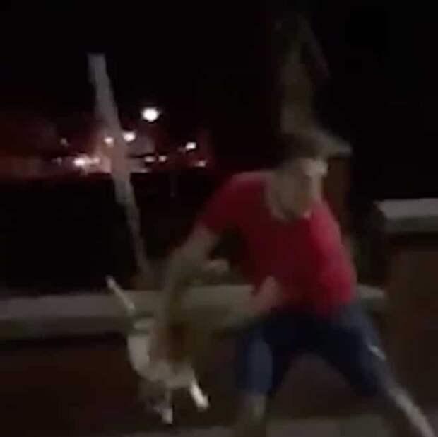 Кота выбрасывают
