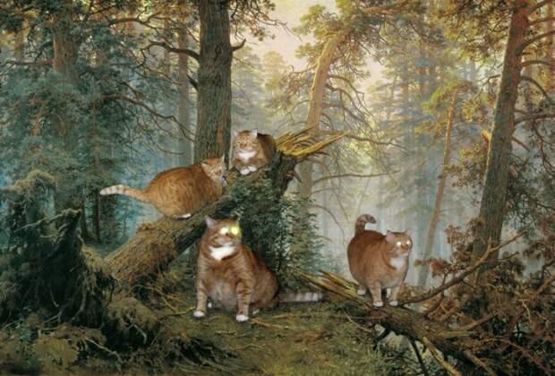 Коты утром в сосновом лесу