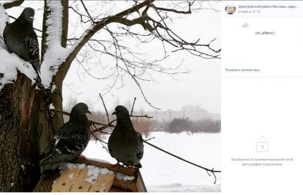 Фото дня: голуби-гурманы в Дмитровском