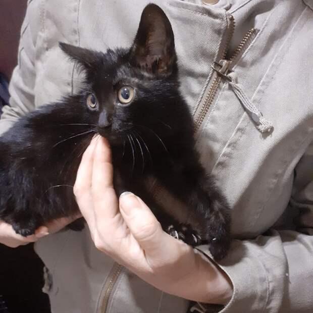 В Хорошёво-Мнёвниках спасли бездомного котёнка, застрявшего под машиной