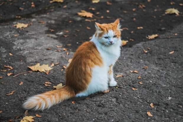 Когда наступает осень Хвостатые, братья наши меньшие, город, кот, кошка, улица, уличные кошки, эстетика