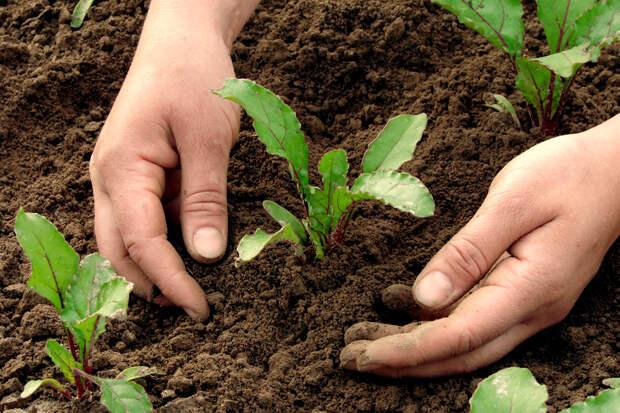 Народные приметы, которые работают: правильное время для посева овощей